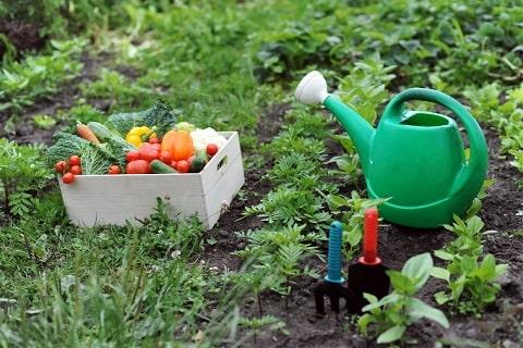 家庭菜園の画像